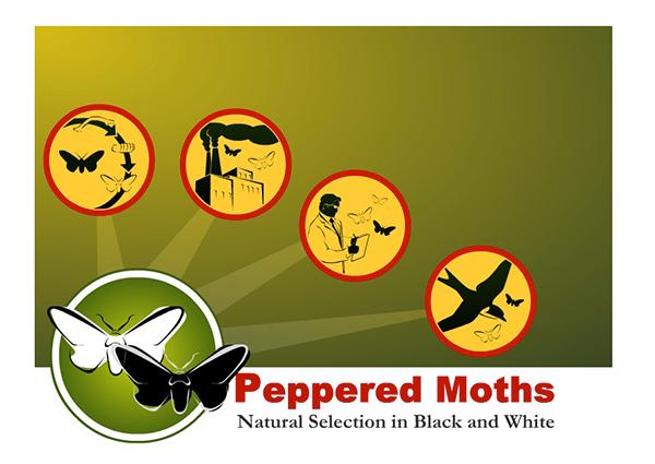 Natural Selection Moths Industrial Revolution